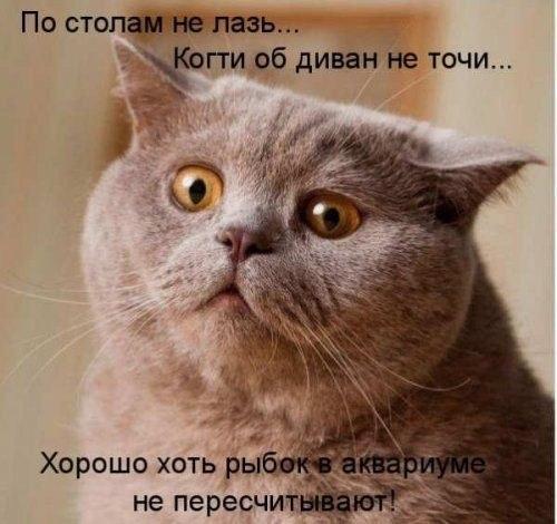 Смешные картинки с надписями про котов - прикольные, ржачные 9