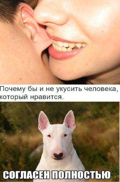 Смешные фото животных с надписями до слез - смотреть ржачные картинки 7