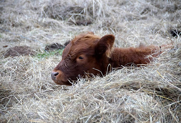 Фото красивых животных мира - удивительные и прикольные 10