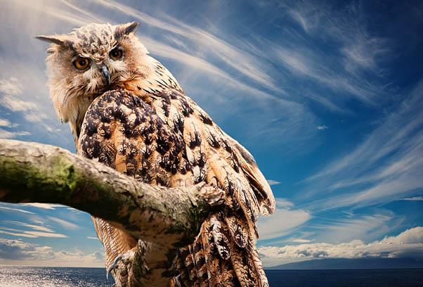 Фото красивых животных мира - удивительные и прикольные 11