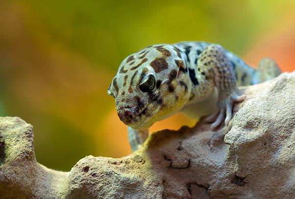 Фото красивых животных мира - удивительные и прикольные 14