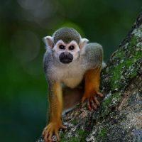Фото красивых животных мира - удивительные и прикольные 5