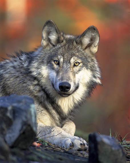 Фото красивых животных мира - удивительные и прикольные 6