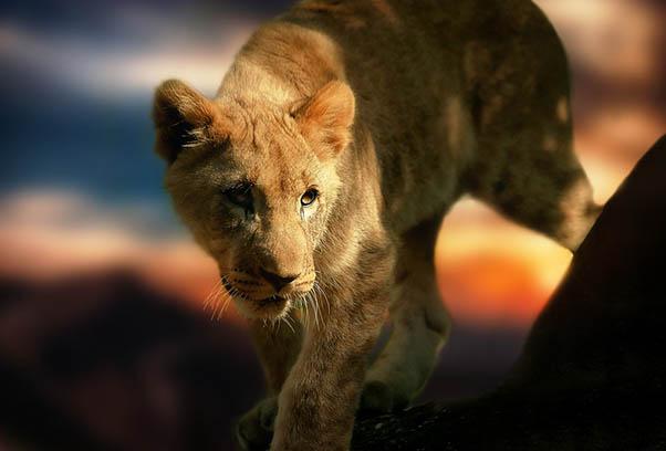 Фото красивых животных мира - удивительные и прикольные 9