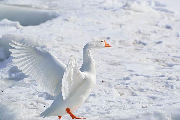 Царства живой природы и фото милых животных - смотреть бесплатно 10