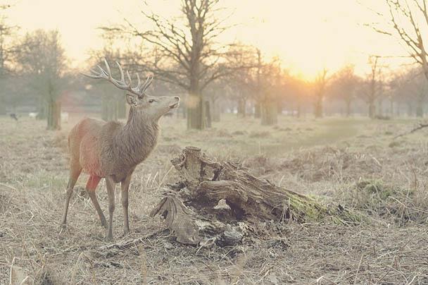 Царства живой природы и фото милых животных - смотреть бесплатно 11