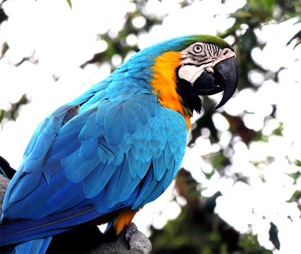 Царства живой природы и фото милых животных - смотреть бесплатно 12