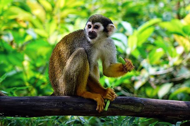 Царства живой природы и фото милых животных - смотреть бесплатно 14