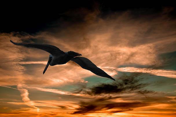 Царства живой природы и фото милых животных - смотреть бесплатно 2