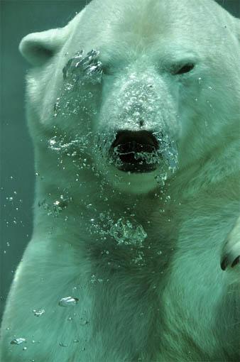 Царства живой природы и фото милых животных - смотреть бесплатно 3