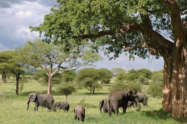 Царства живой природы и фото милых животных - смотреть бесплатно 4