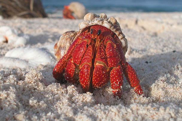 Царства живой природы и фото милых животных - смотреть бесплатно 8