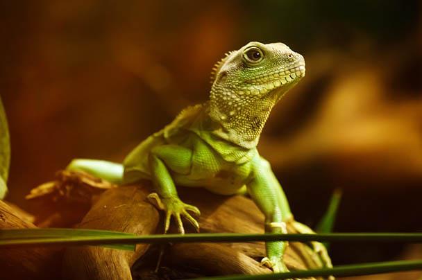Царства живой природы и фото милых животных - смотреть бесплатно 9
