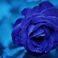 Цветы фото красивые - скачать бесплатно, удивительные, классные 11