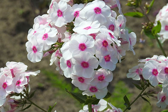 Цветы фото красивые - скачать бесплатно, удивительные, классные 2