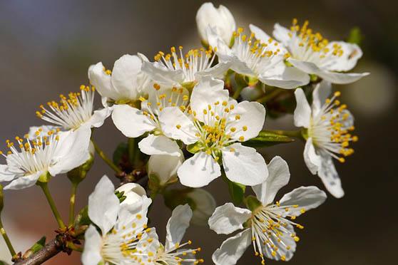 Цветы фото красивые - скачать бесплатно, удивительные, классные 4