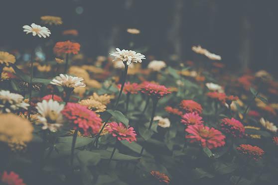 Цветы фото красивые - скачать бесплатно, удивительные, классные 6