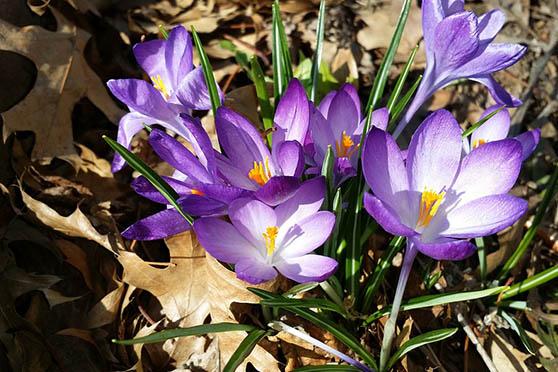 Цветы фото красивые - скачать бесплатно, удивительные, классные 8