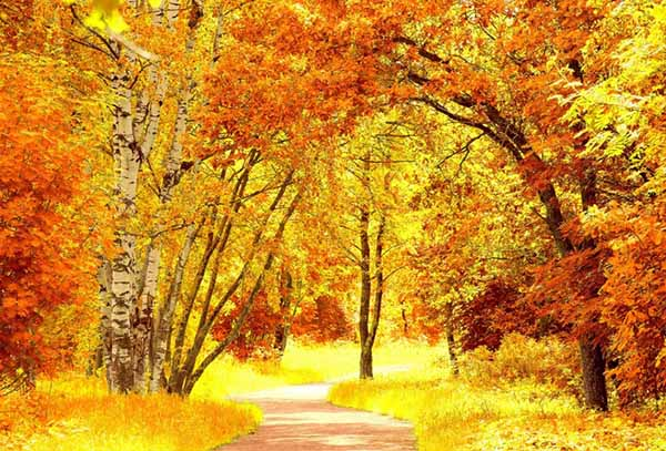 Картинки осень природа, красивые фото осени природа 2