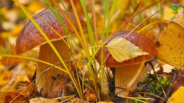 Картинки осень природа, красивые фото осени природа 4