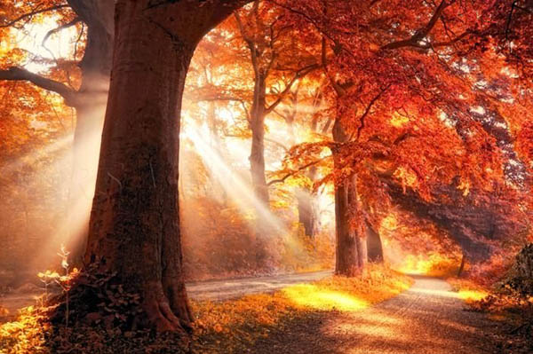 Прикольные и красивые - картинки, фото природы 5