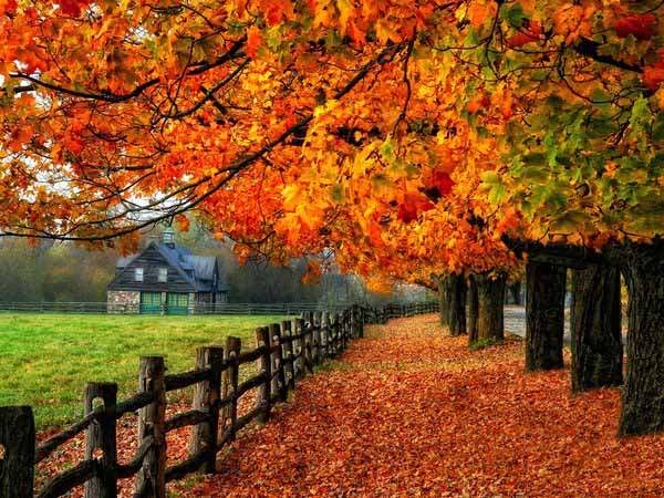 Картинки осень природа, красивые фото осени природа 3