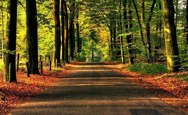 Прикольные и красивые - картинки, фото природы 8