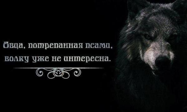 Картинки с волками и надписями про жизнь со смыслом новые