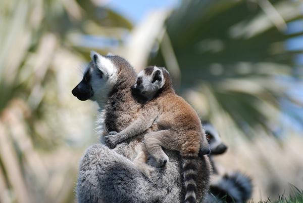 Прикольные фото животных - красивые и смешные, смотреть 3