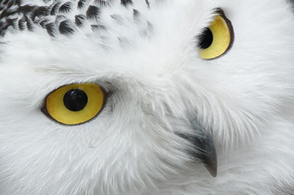 Самые красивые животные в мире фото - смотреть бесплатно 1