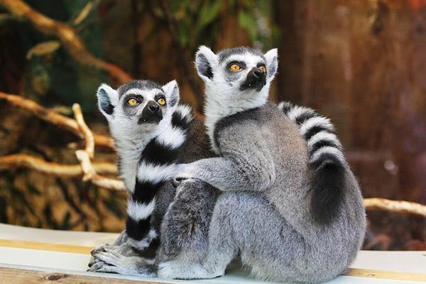 Прикольные фото животных - красивые и смешные, смотреть 4