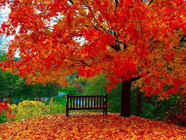Картинки осень природа, красивые фото осени природа 7