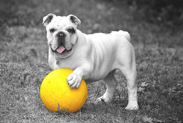 Прикольные фото животных - красивые и смешные, смотреть 5