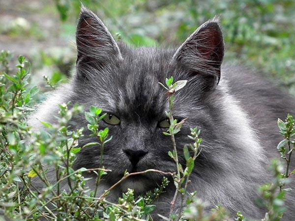 Прикольные фото животных - красивые и смешные, смотреть 7