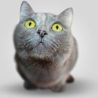 Прикольные фото животных - красивые и смешные, смотреть 8