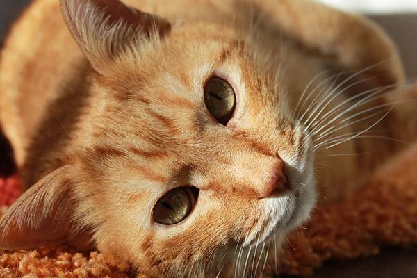 Самые красивые фото животных - прикольные, крутые, классные 4