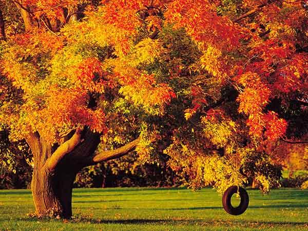 Картинки осень природа, красивые фото осени природа 9
