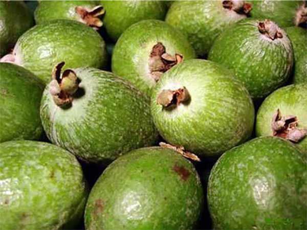 Фейхуахуа фрукт - красивые фото и картинки, смотреть 9
