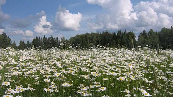 Красивые и удивительные картинки природы России, смотреть 13