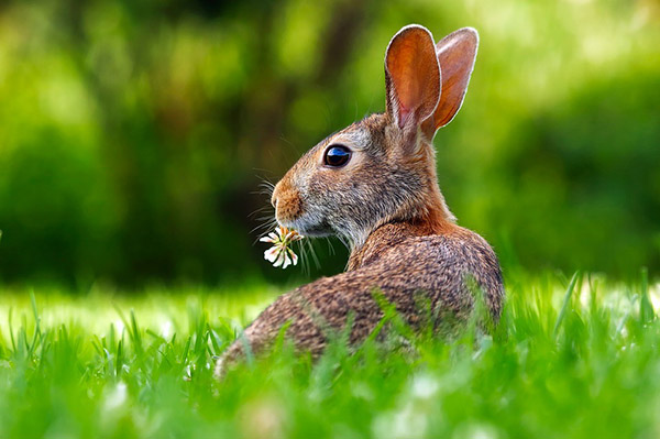 Самые красивые животные в мире фото - смотреть бесплатно 12