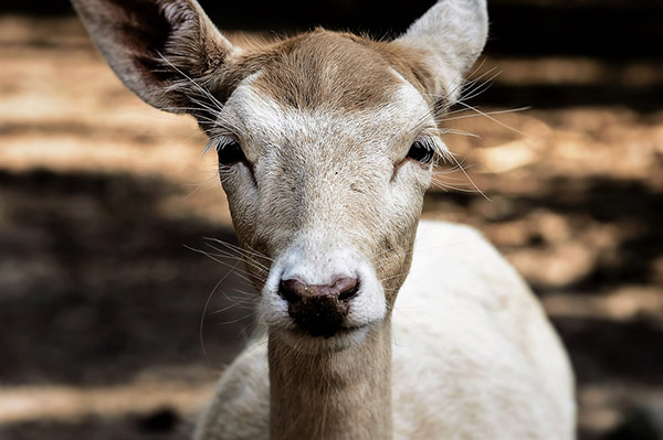 Самые красивые фото животных - прикольные, крутые, классные 17