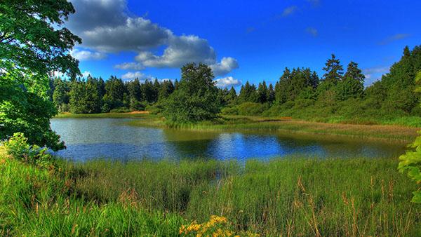 Картинки лето природа, красивые картинки пейзажи природы 15