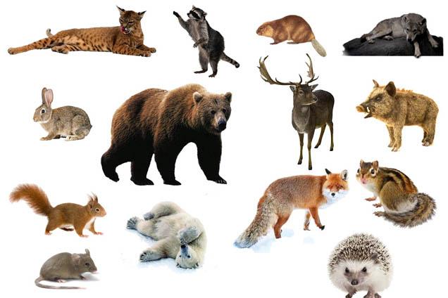 Дикие животные - картинки для детей, прикольные, красивые 1