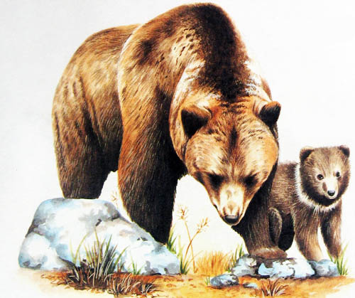 Дикие животные - картинки для детей, прикольные, красивые 5