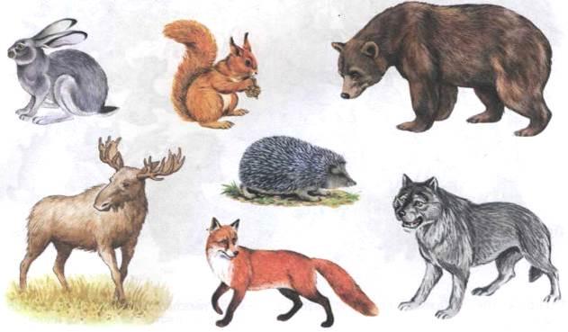Дикие животные - картинки для детей, прикольные, красивые 7