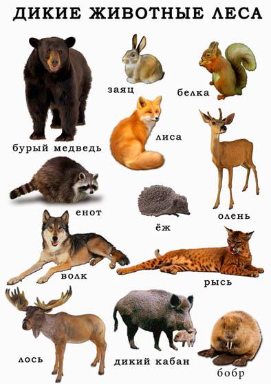 Дикие животные - картинки для детей, прикольные, красивые 8
