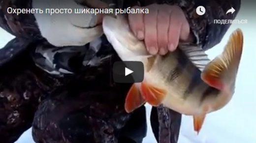 Зимняя рыбалка 2017 - смотреть видео, интересные, прикольные