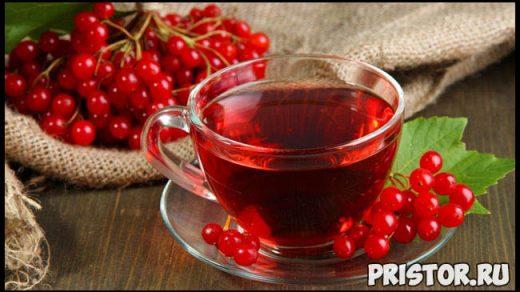 Калина красная - лечебные свойства и противопоказания, применение 3