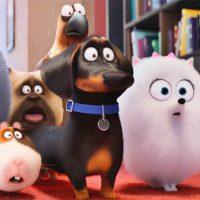 Картинки из мультика - Тайная жизнь домашних животных 13