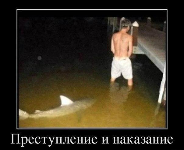 Картинки и фото самых смешных животных с надписями - смотреть 3